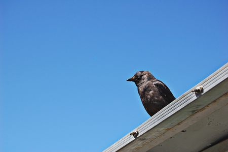 Jackdaw perched on building Stock Photo - 489853