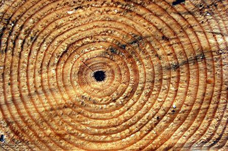 sawn: Sawn pine tree trunk
