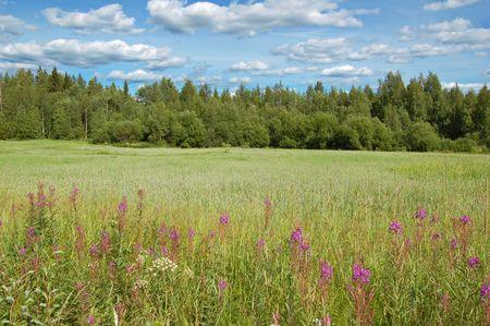 crop margin: Pradera de verano en Finlandia  Foto de archivo