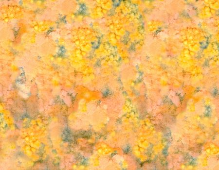 uneatable: Close-up of mold on old food Stock Photo