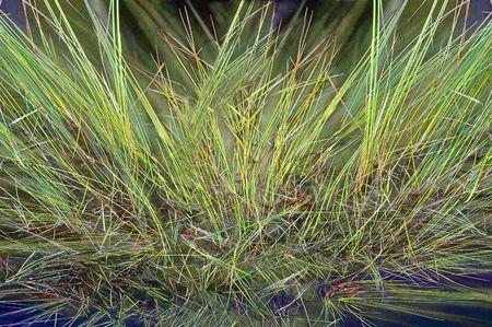 grass verge: Rough erboso tussock sfondo di progettazione