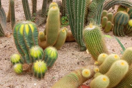 cactus species: A group of mixed cactus species in a greenhouse Stock Photo