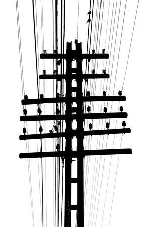 telegraaf: Geïsoleerde telegraaf stokken en draden op wit Stockfoto