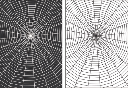 tense: Vector designs of spiders webs