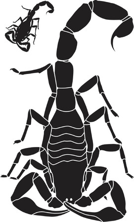 scorpion: Vector illustration of a scorpion with basic outline included