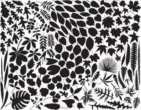 hundreds: Collection of hundreds of vector leaf outlines