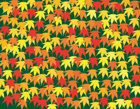 japanese maple: Background vector design of Japanese maple leaves in fall