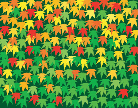 Background vector design of Japanese maple leaves in early fall Vector