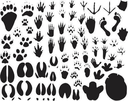 foot path: Collection of vector outlines of animal foot prints