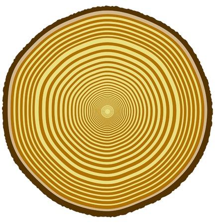 duramen: Ilustración vectorial de los anillos de los árboles de un 33 años de edad del árbol