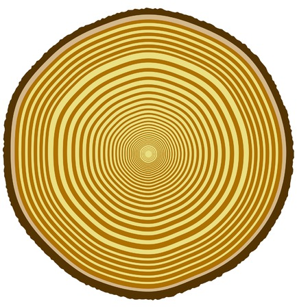 Vector illustration of tree rings from a 33-year-old tree Illustration