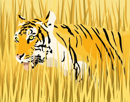 dry grass: Vector illustration of a tiger in dry grass with tiger and grass as separate elements