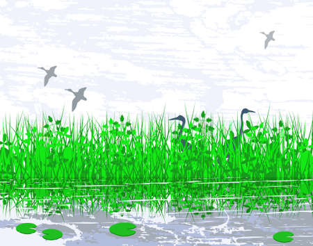 Vector illustration of birds in a wetland habitat Vector
