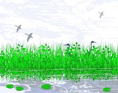 Vector illustration of birds in a wetland habitat