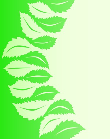 hedge trees: Illustrated vector design of generic leaf shapes