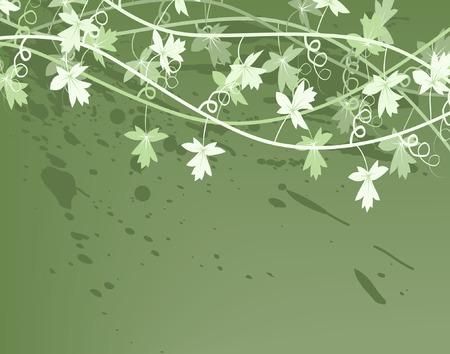 Editable vector illustration of a generic vine bush Stock Vector - 1584400