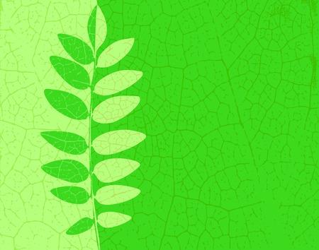ash: Editable vector illustration of an ash leaf with veins Illustration