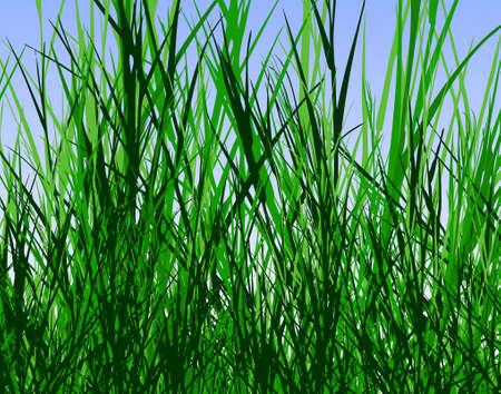 hoog gras: Bewerkbare vector ontwerp van hoge ruwe gras