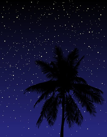 frond: Editable vector illustration of a palm tree under the stars at night