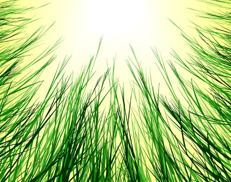 grass verge: Editable vector design looking up through rough grass  Illustration