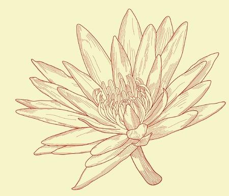lily flower: Editable vector illustratie van een waterlelie bloem