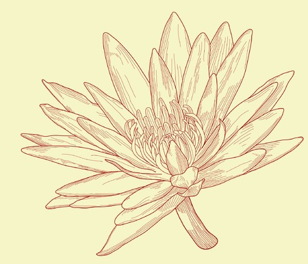 Editable vector illustration of a water lily flower Illustration