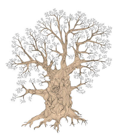 snag: Detailed editable vector illustration of a leafless oak tree including basic outline