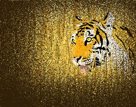 Vector illustration of a tiger in grass with grunge on separate layer Stock Vector - 3170035