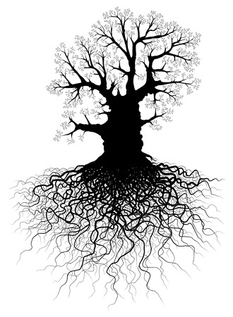 Editable vector illustration of a leafless oak tree with root system Vector