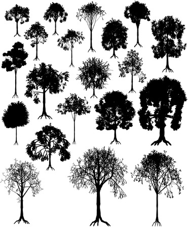 forrest: Set of editable vector tree silhouettes from summer and winter