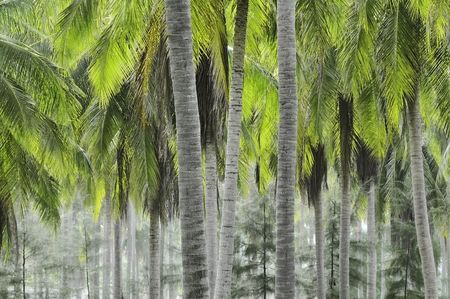Plantation of coconut palms in coastal Thailand Stock Photo - 4788230