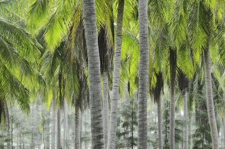 treetrunk: Plantation of coconut palms in coastal Thailand Stock Photo
