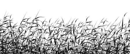 marsh plant: Dettagliati silhouette vettoriali modificabili di un canneto