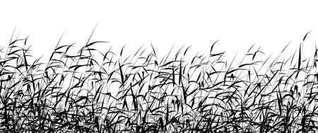 hoog gras: Gedetailleerde editable vector silhouet van een riet-bed Stock Illustratie