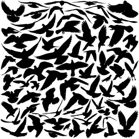 Silhouettes of pigeons in many different flying positions and angles Vector