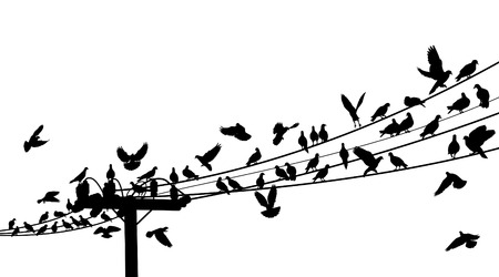 silhouettes of birds roosting on telegraph wires Stock Vector - 6196911