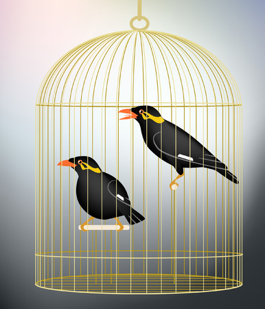 caged: Editable illustration of a pair of caged hill myna birds made with gradient meshes