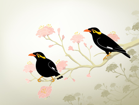 perching: Editable illustration of a pair of endangered hill myna birds