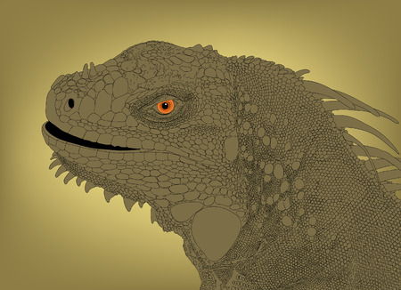 scaly: Detailed editable   illustration of an iguana head
