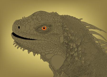 com escamas: Detailed editable   illustration of an iguana head