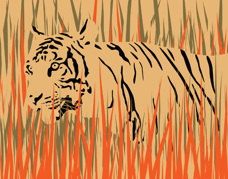dry grass:   illustration of a tiger in dry grass with tiger and grass as separate elements