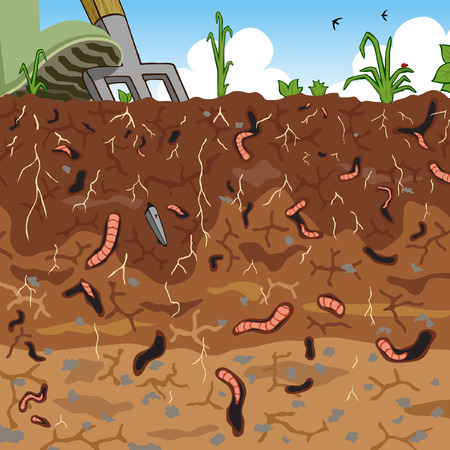 fertile:   illustration of earthworms in garden soil Illustration