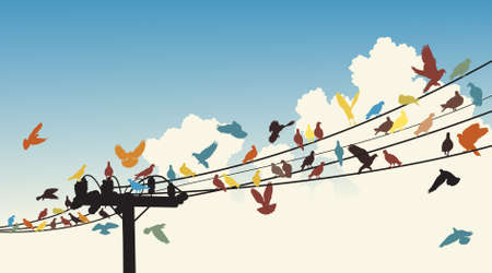 flock of birds:   silhouettes of colorful birds roosting on telegraph wires
