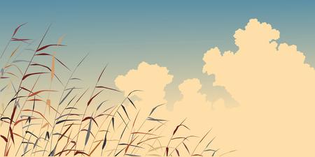 marsh plant: Illustrazione modificabile di canne tonica contro il cielo