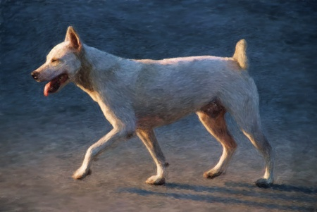 panting: Painted illustration of a mongrel street dog walking quickly Stock Photo