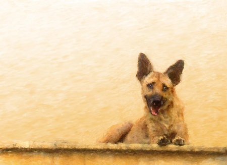 alsatian: Painted portrait of a young Alsatian cross dog lying on a wall or top step