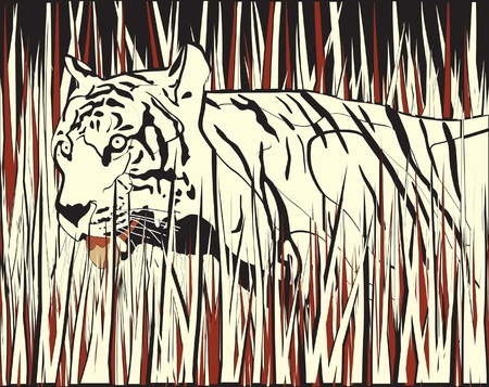 dry grass: illustration of a tiger prowling through dry grass