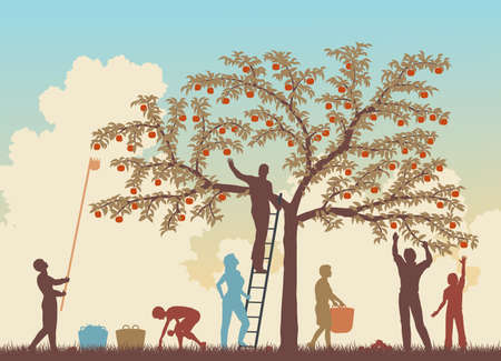 gather: Editable vector colorful illustration of a family harvesting apples from a tree