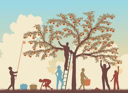apfelbaum: Editierbare Vektor-bunten Illustration einer Familie ernten �pfel von einem Baum