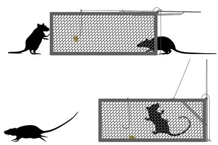 rata: Ilustración editable de una rata de quedar atrapados en una trampa humana Vectores